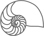Drawing of a Nautilus Shell